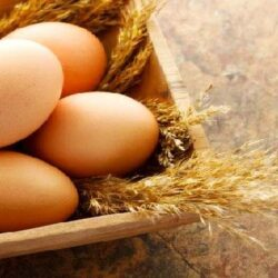 میزان تولید تخم مرغ در البرز؛ ۳۰ برابر میانگین کشور