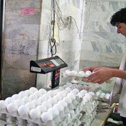 درحالیکه همیشه مصرفکنندگان تخممرغ همزمان با افزایش قیمت مرغ شاهد افزایش قیمت تخممرغ بودند اما از ابتدای ماه مبارک رمضان قیمت تخممرغ در مشهد مقدس سیر نزولی به خود گرفته است و حتی این محصول به قیمت مصوب دولتی نیز خریدار ندارد.