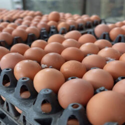 آینده روشنی پیش روی بازار تخم مرغ نیست/ تولید مازاد ماهانه حداقل ۶ هزار تن تخم مرغ
