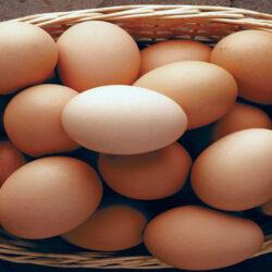 نوسانات قیمت تخممرغ