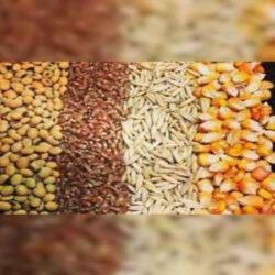ضرورت واردات بیش از ۲۰ میلیون تن نهادههای دامی در شرایط خشکسالی امسال