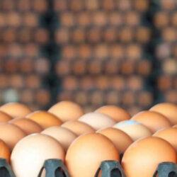 توقف صادرات تخم مرغ/ کاهش قیمت در راه است.