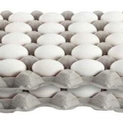 اعلام حداکثر قیمت هر شانه تخممرغ