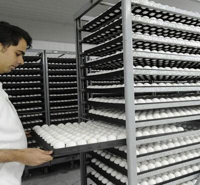دو راهکار پیشنهادی برای جلوگیری از زیان تولیدکنندگان تخممرغ