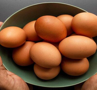 مدیر کل دامپزشکی کردستان گفت: مرحله عملیاتی طرح ارتقاء کیفیت و تضمین سلامت تخم مرغ در کردستان آغاز شد.