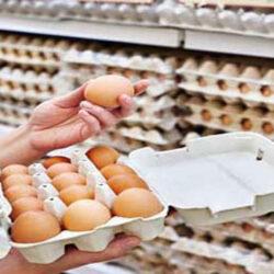 معاون سلامت دامپزشکی کردستان گفت: به منظور حمایت از حقوق مصرف کنندگان برای تامین سلامت مواد غذایی، هشت واحد عمده توزیع کننده تخم مرغ در سنندج به علت رعایت نکردن ضوابط بهداشتی و نگهداری پلمب شد.