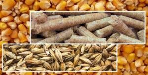 اجرای طرح تضمین کیفیت فرآورده های خام دامی و خوراک دام