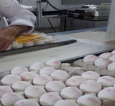 قیمت تخممرغ از ابتدای سال تاکنون بدون توجه به قیمتهای مصوب و تعزیراتی با فراز و فرودهای بسیاری همراه بوده است که هنوز هم ادامه دارد.