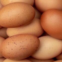 ضرورت تدبیر دولت برای جلوگیری از گرانی تخممرغ