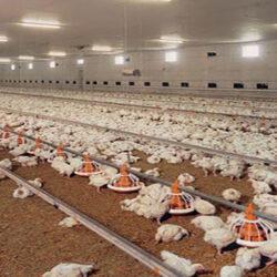 گوشت مرغ هم از سفره مردم در حال حذف و به گفته مسئولان تخم مرغ در حال جایگزین شدن آن است.