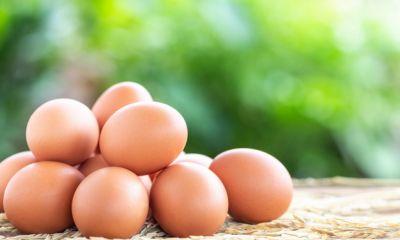 بازار تخم مرغ تعریفی ندارد؛ نرخ منطقی هر کیلو تخم مرغ ۱۱ هزار تومان