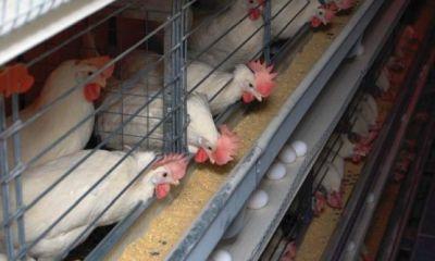 تلاش تولیدکنندگان سویای آمریکا در بازپس گیری بازار خود در چین