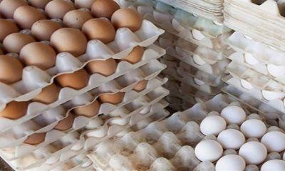 تخممرغ روی دست مرغداران باد کرد