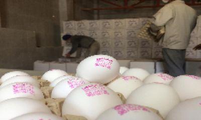 استمرار ثبات قیمت تخممرغ در بازار