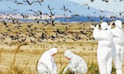 عدم مشاهده آنفلوآنزا فوقالعاده حاد پرندگان در گیلان