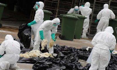 تایید آنفولانزای مرغی در اکراین