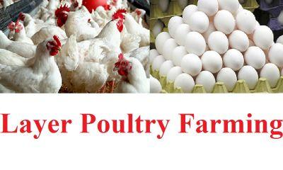 مرغ و تخم مرغ هنوز به قیمت واقعی نرسیده است