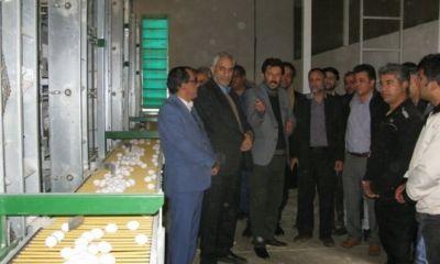 بزرگترین مجموعه درحال ساخت تولید تخم مرغ کشور