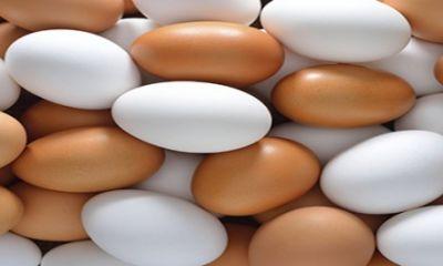 توقیف ۵۲ دستگاه تریلی حامل تخم مرغ قاچاق