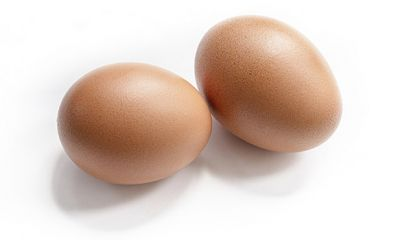 پیشنهاد افزایش ۲۰ درصدی قیمت تخم مرغ را دادهایم