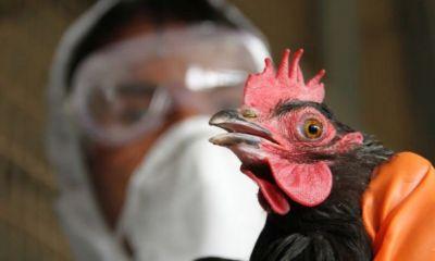 ۶ میلیون قطعه مرغ و طیور در اصفهان واکسینه شدند