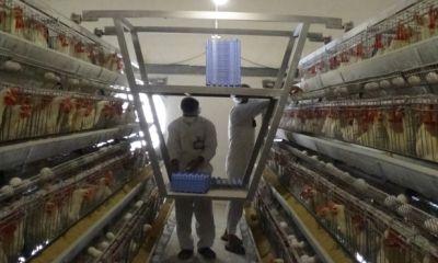 کاهش قیمت تخم مرغ نسبت به ماه گذشته