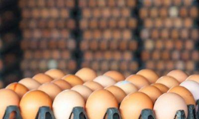 صادرات روزانه ۱۵۰ تن تخم مرغ به عراق