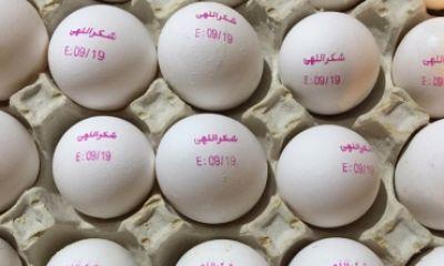 تولید تخم مرغ به یک میلیون تن میرسد