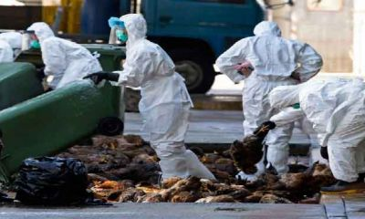 ۲۰ کانون آلوده به آنفلوآنزای پرندگان در اصفهان شناسایی شد