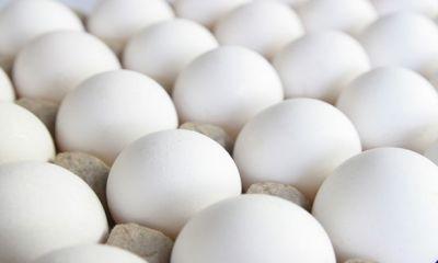 ۲۰ درصد تخممرغ تولیدی قزوین به قیمت بازار