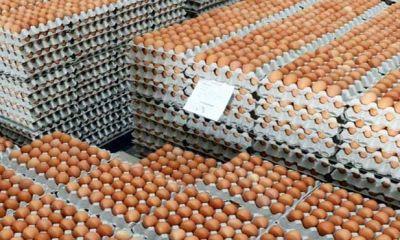 واردات تخم مرغ از بین بردن بیت المال است