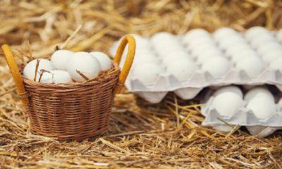 تخم مرغ ارزان شد/ افزایش تولید، دلیل اصلی کاهش قیمت