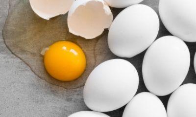تولید تخم مرغ غنی شده جایگزین مکمل اسید فولیک
