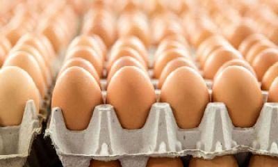 تولید بیش از نیاز مرغ و تخممرغ در کشور