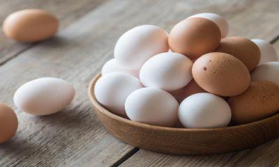 تولید تخم مرغ از نیاز کشور سبقت گرفت