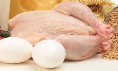 تخممرغ به مرغ رسید