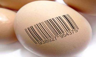 تخم مرغ های مارک دار