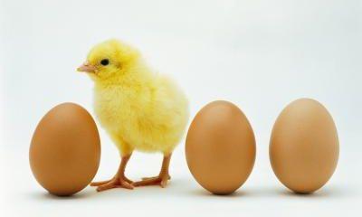 افزایش قیمت نهادهها عامل گرانی مرغ و تخم مرغ در بازار