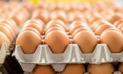 ۲۰۰ تن تخم مرغ وارد کشور شد