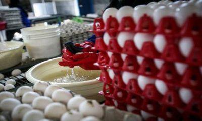 ۲۰۰۰ تن تخم مرغ برای تنظیم بازار