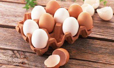 دولت علیه صادرات؛ از سنگ آهن و کنسانتره مس تا تخم مرغ و شیرخشک