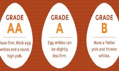 طرح ارتقای کیفیت تخم مرغ تابستان امسال اجرا میشود.