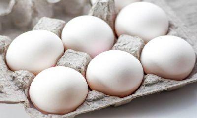 قیمت تخم مرغ کمترین نوسان را در بازار داشته است.