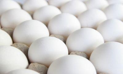 شهروندان از خرید تخم مرغ های فله و فاقد هویت خودداری کنند